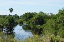 Pantanal – die grüne Arche Brasiliens